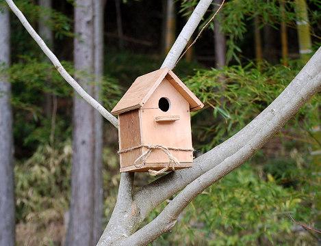 ネムノキの巣箱
