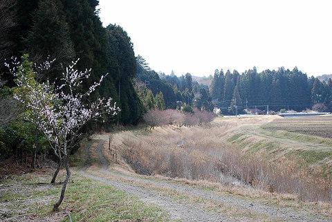 春の川の風景