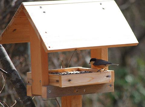 餌台に集まる小鳥