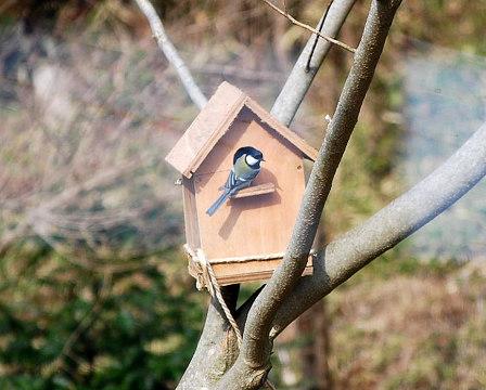 巣箱のシジュウカラ3