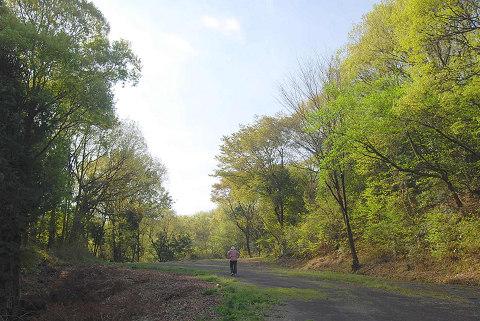 新緑の雑木林2