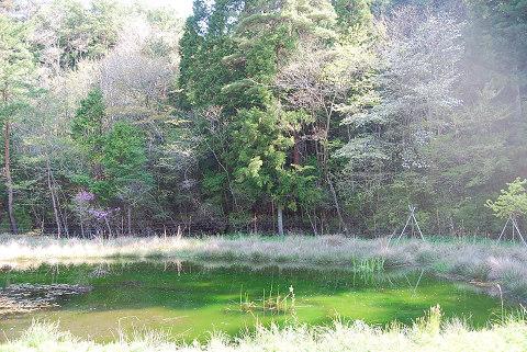 トンボ池の風景