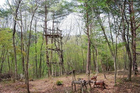アスレチックのある新緑の雑木林
