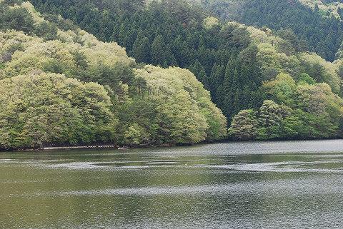 三河湖の新緑3