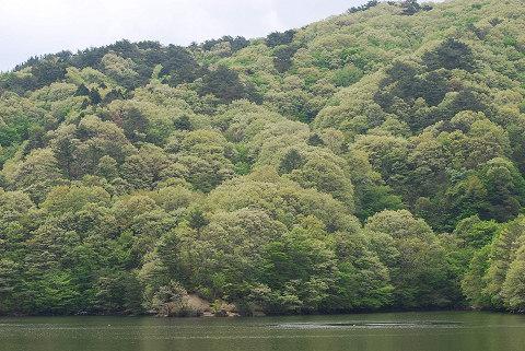 三河湖の新緑2