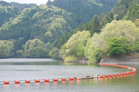 三河湖の新緑4