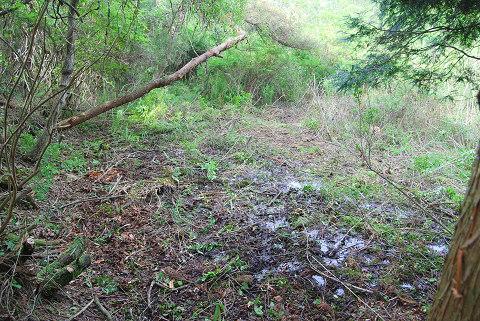 切り開いた湿地