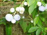 blueberry_01.jpg
