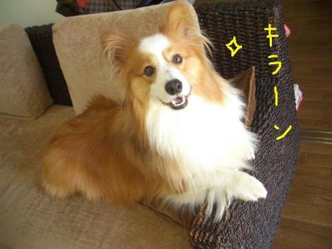らーしゅー  ☆