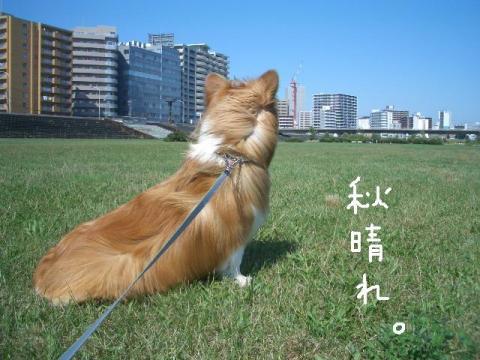 らーしゅー 008    ☆