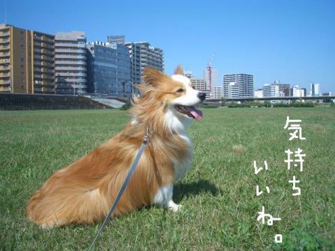 らーしゅー 009   ☆
