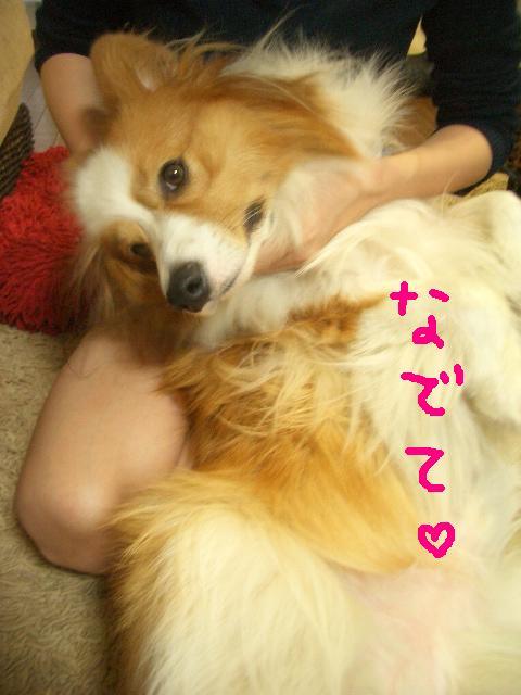 らーしゅー 067   ☆