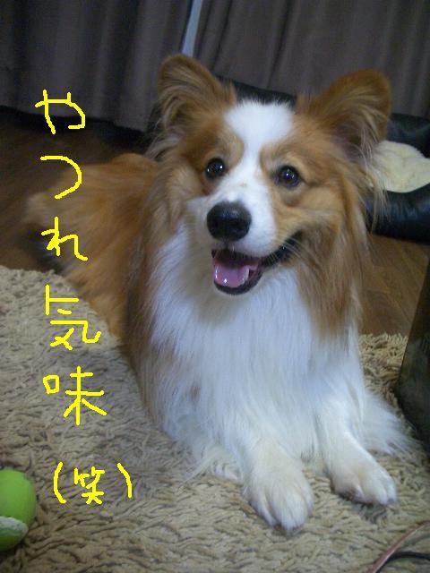 2008.9.12  ラムシュリ 012   ☆