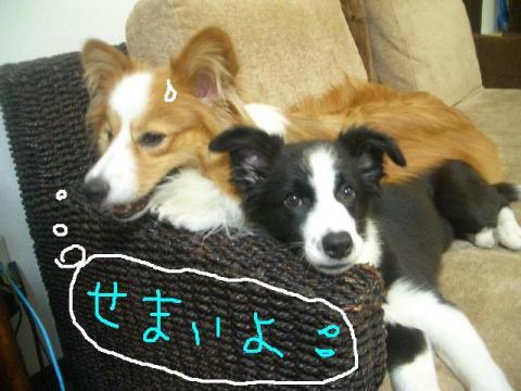 2008.9.12  ラムシュリ   2 002   ☆