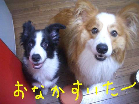 2008.9.13 005   ☆