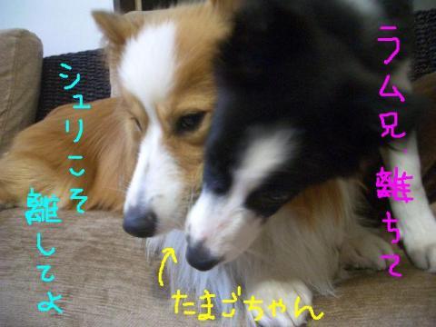 2008.9.14 モンスター 001   ♪