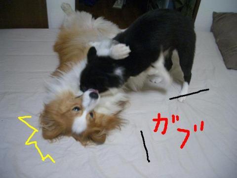 2008.9.14 モンスター 016   ♪