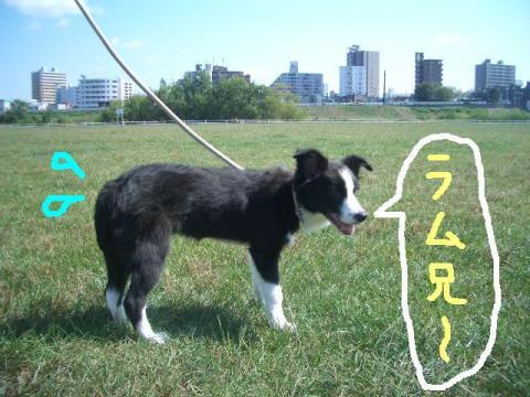 2008.9.16 シュリお散歩デビュー 012   ☆