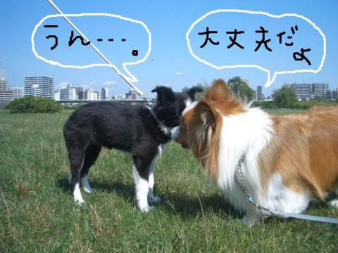 2008.9.16 シュリお散歩デビュー 007   ☆
