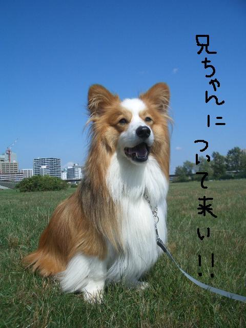 2008.9.16 シュリお散歩デビュー 011   ☆