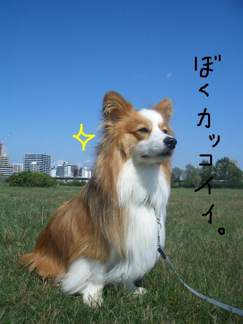 2008.9.16 シュリお散歩デビュー 009   ☆