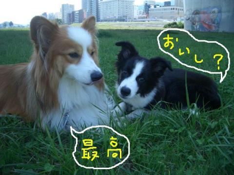 2008.9.16 シュリお散歩デビュー 015   ☆