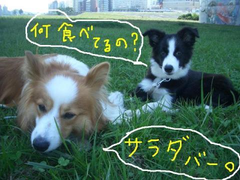 2008.9.16 シュリお散歩デビュー 016   ☆