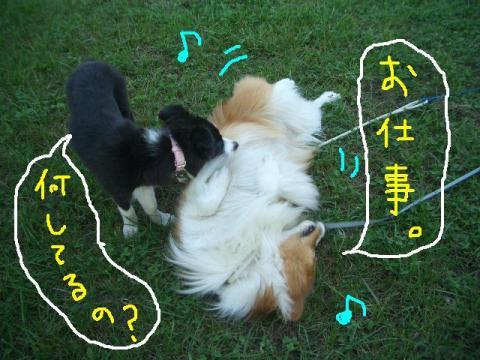 2008.9.16 シュリお散歩デビュー 030   ☆