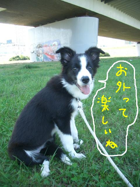 2008.9.16 シュリお散歩デビュー 020   ☆