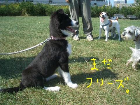 2008.9.16 シュリお散歩デビュー 037    ☆