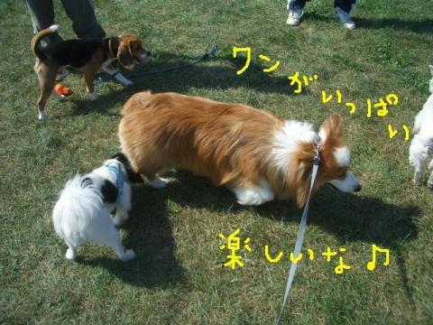 2008.9.16 シュリお散歩デビュー 038   ☆
