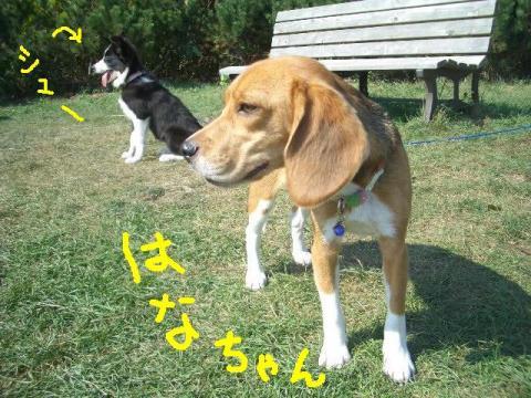 2008.9.16 シュリお散歩デビュー 048   ☆