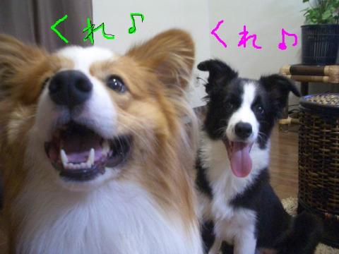 2008.9.17  ★大運動会★ 021   ☆