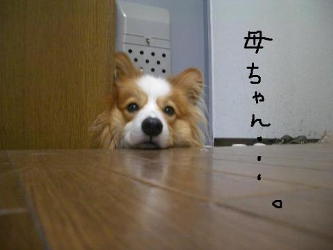 2008.9.17  ★大運動会★ 023   ☆