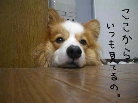 2008.9.17  ★大運動会★ 025   ☆