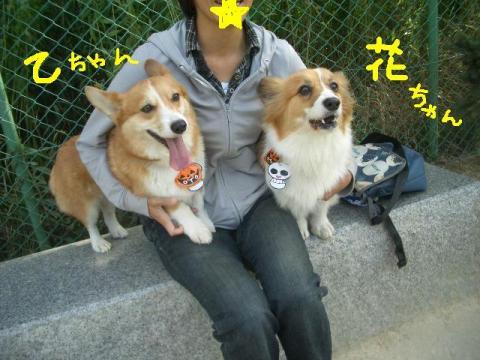 樽川ドッグラン 039   ☆