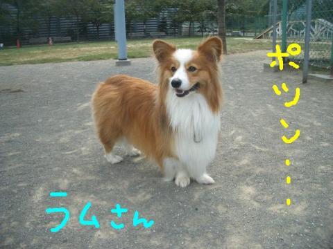 樽川ドッグラン 019   ☆