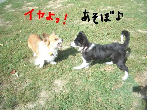 樽川ドッグラン 051  ☆ ☆