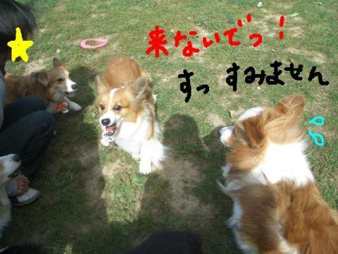 樽川ドッグラン 053   ☆