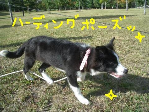 トワ君と中島公園9・29 017   ☆