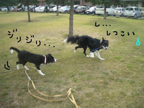 トワ君と中島公園9・29 035   ☆