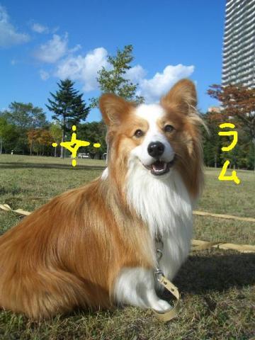 トワ君と中島公園9・29 037   ☆
