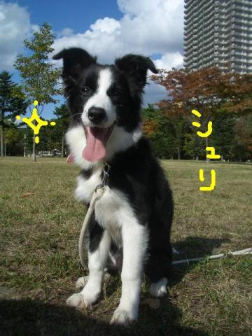 トワ君と中島公園9・29 002   ☆