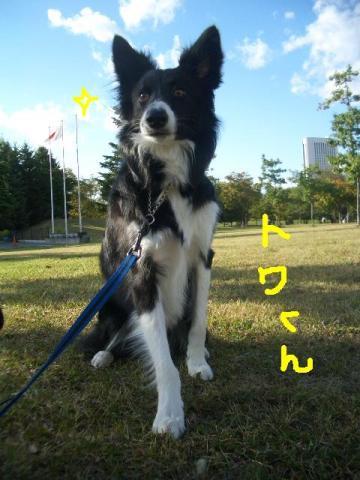 トワ君と中島公園9・29 049   ☆
