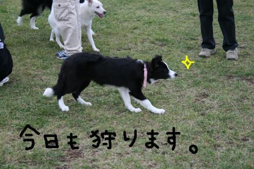 ★2008・10・10グリド★ 005   ☆