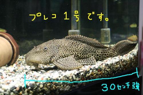 ★2008・10・10グリド★ 027   ☆