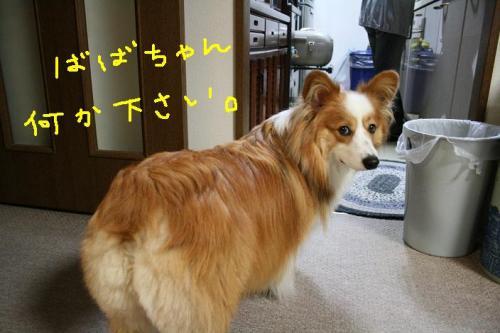 ★2008・10・10グリド★ 040   ☆