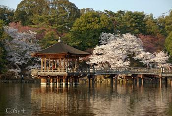 桜と浮見堂