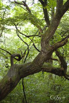 不思議な枝