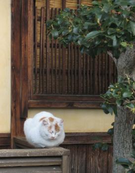奈良町のねこ